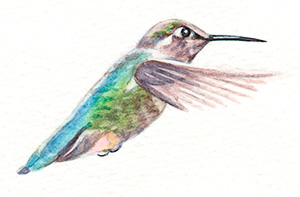 artfulpassages.com - Hummingbird Watercolor Lesson - Add details