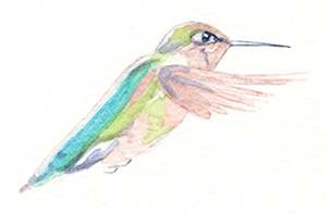 artfulpassages.com - Hummingbird Watercolor Lesson - Paint base colors