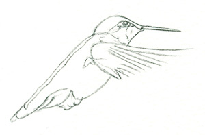 artfulpassages.com - Hummingbird Watercolor Lesson - Start w/Pencil Sketch