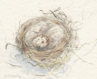 Nest - Watercolor