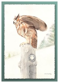 #40 Watchful Owl