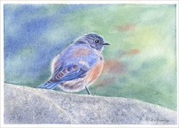Bluebird - Watercolor