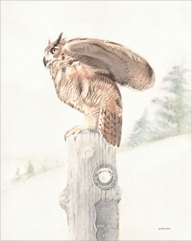 Cemetery Owl - Watercolor