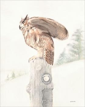Cemetery Owl - Watercolor
