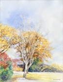 Birch Tree - Watercolor