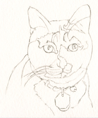 Pencil sketch of cat, in preparation for painting a watercolor