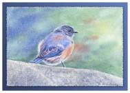 #21 Bluebird