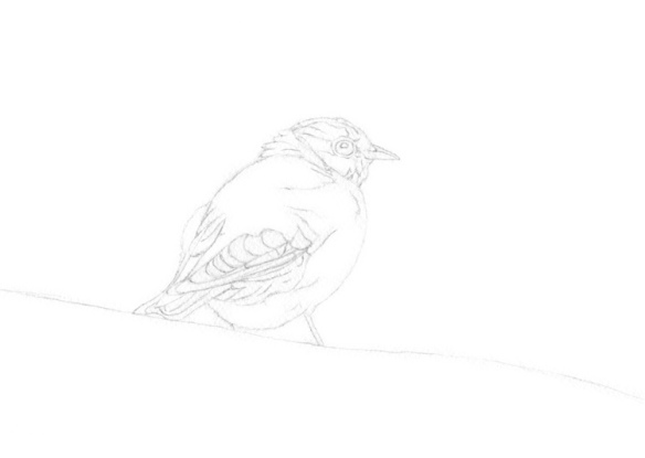 Stage 1, pencil sketch, in preparation for watercolor painting of a Bluebird, by artist Barbara Bromley