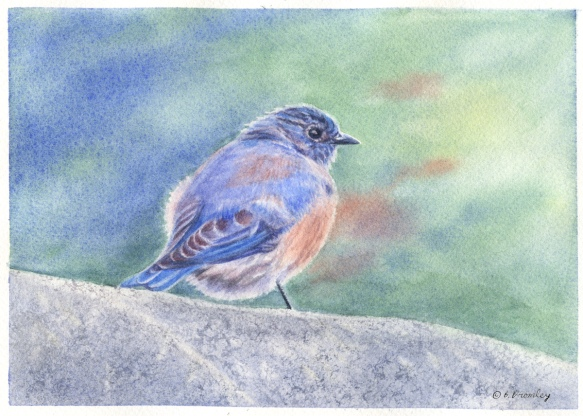 Finished watercolor painting of a Bluebird, by artist Barbara Bromley