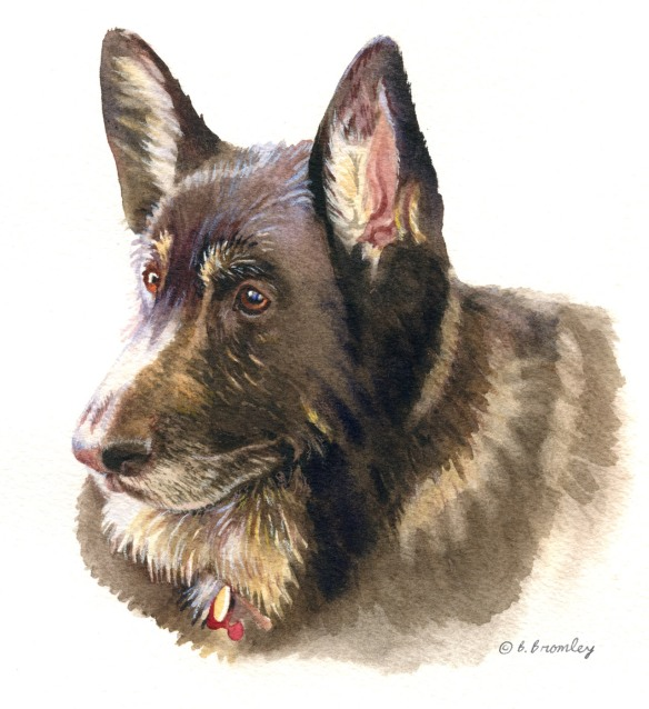 Barbara Bromley Watercolor painting lobo dog tutorial german shepard