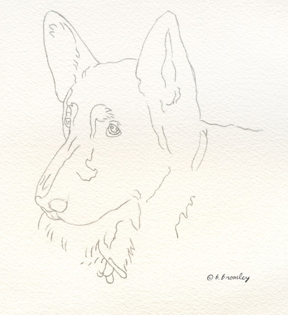 Barbara Bromley Watercolor painting lobo dog tutorial german shepard pencil sketch
