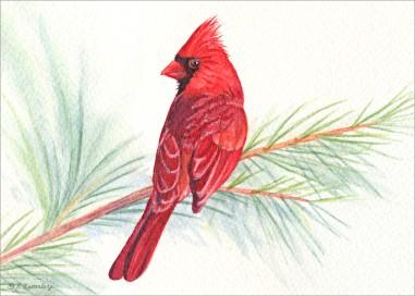#35 Cardinal Pine