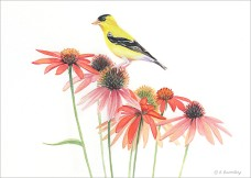 #8 Goldfinch w/Flowers