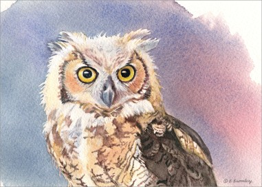 #10 Owl Face