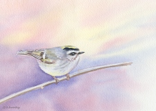 #45 Kinglet on Branch